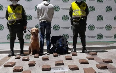 19 kilos de marihuana, nueva incautación de las autoridades en Ibagué
